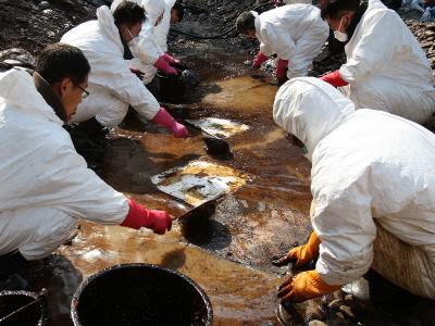 태안기름유출사고 자원봉사자 기름제거작업 7 대표이미지